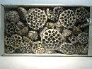 Lotuskolben STONE-WASHED 100 St.mix 6-10cm