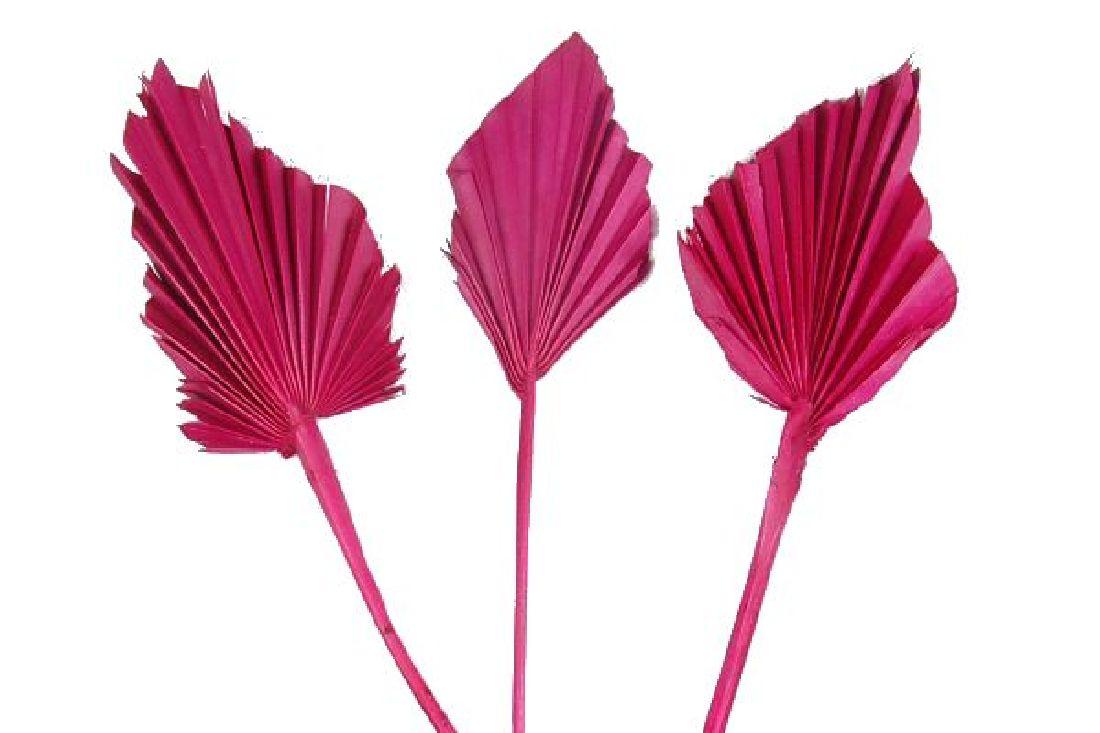 Palmspear azalee 67 100St.