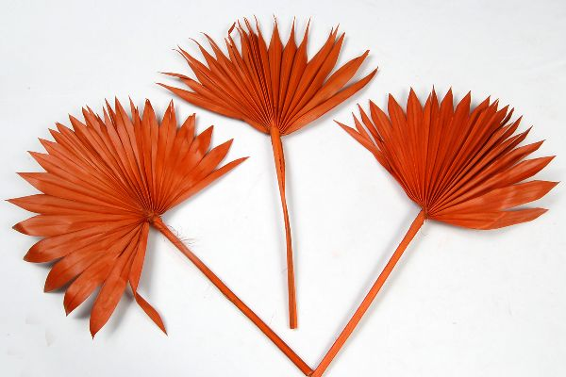 Palmspear ORANGE 10 Sonne 50St.