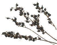 Black Berry NATUR 100 St. Schwarzbeeren