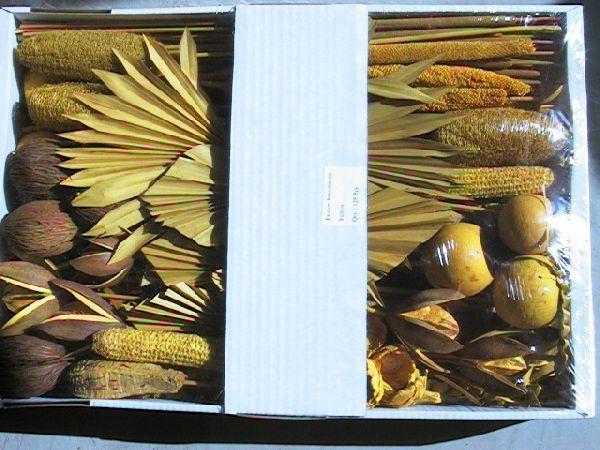Exoten Sortiment GOLDGELB 48 Collection ca. 125 Teile