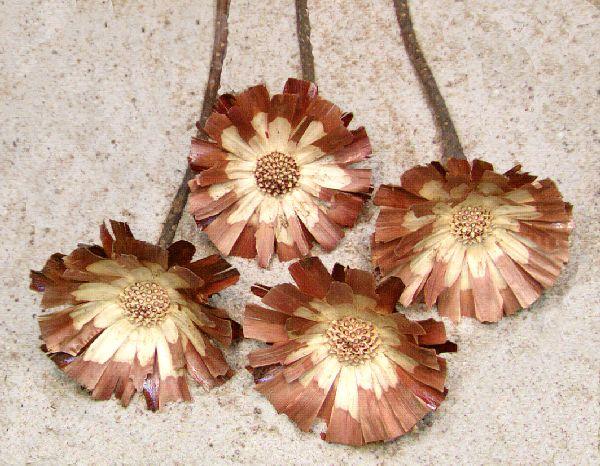 Protea Repens NATUR-helle Mitte 100St. 8-9cm Rosette helle Mit