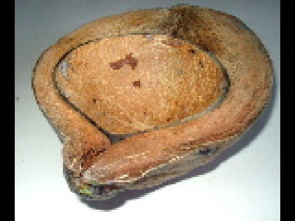 Kokosnuss Hälfte NATUR 20cm