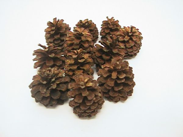Bergkiefer Zapfen NATUR 5 kg ca. 4-5 cm