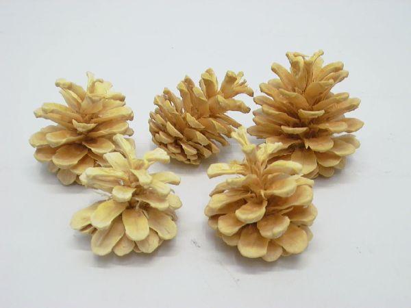 Schwarzkiefer Zapfen GEBLEICHT 100 Stück ca. 5-7cm
