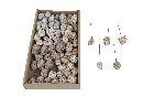 Zapfenmischung WHITE-WASH 13862 70 Stück Leucodendron angedrahtet
