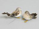 Vogel CREME-BRAUN-APRICOT 9cm 204893