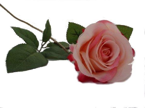 Rose Marissa ROSA 14606 40 Ø7,5cm L=40cm