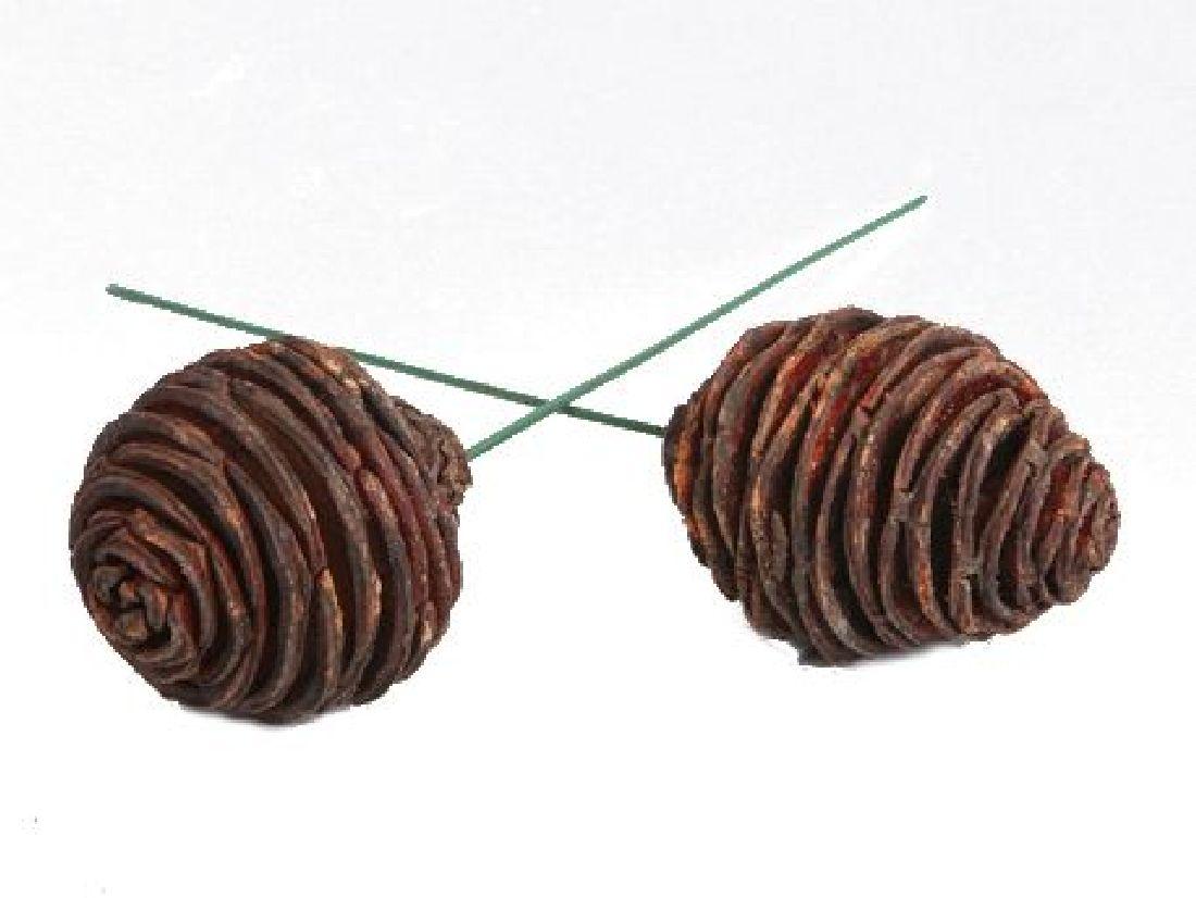 Platyspermum angedrahtet BRAUN 490022 55 Stück 10cm